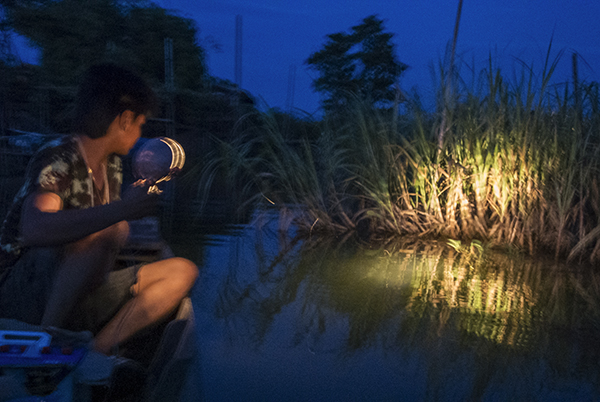 An aquarium fisherman scans the riverbank for needlefish.