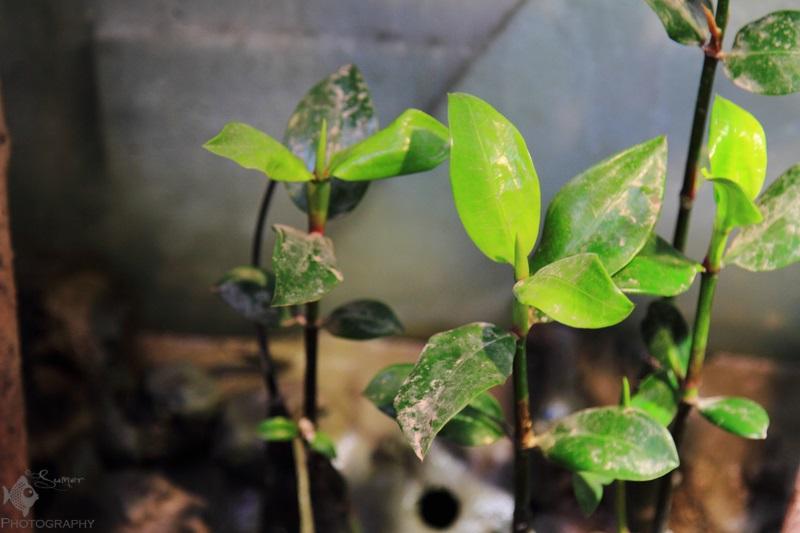 Sunderban Biotope
