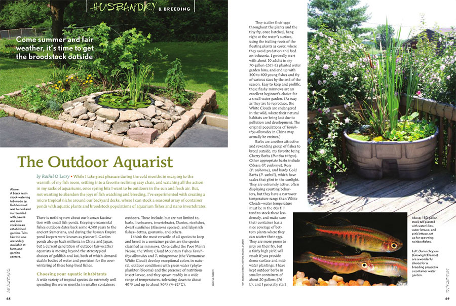 The Outdoor Aquarist, by Rachel O'Leary, presents ideas for bringing tropical fishes outside in the summer for breeding and growout.