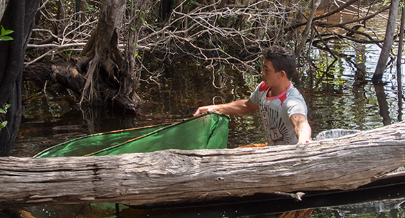 Fishing for Cardinal Tetras and other aquarium species in the Rio Negro, northern Brazil. Image: Project PIABA.
