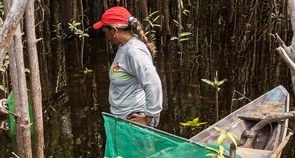 An example of local aquarium fishing families who also work to protect vulnerable ecosystems, Project Piaba may serve as model for other conservation initiatives. Image: Project Piaba.