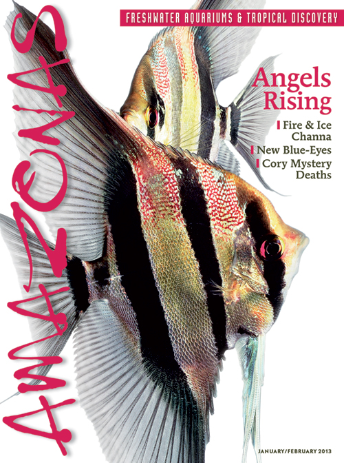 Angels Rising - AMAZONAS Magazine, January/February 2013 issue