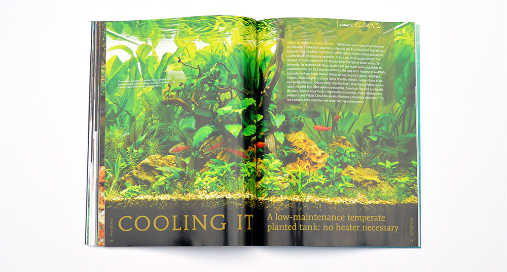 """Odessa Barbs feature prominently in George Farmer's unheated planted aquarium. Learn more in """"Cooling It - A low-maintenance temperate planted tank: no heater necessary"""""""
