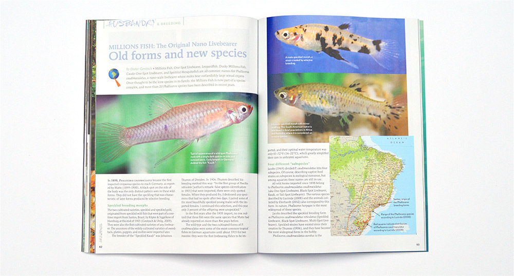 Dieter Gentzsch introduces The Original Nano Livebearer, Old Forms and New Species from the genus Phalloceros.
