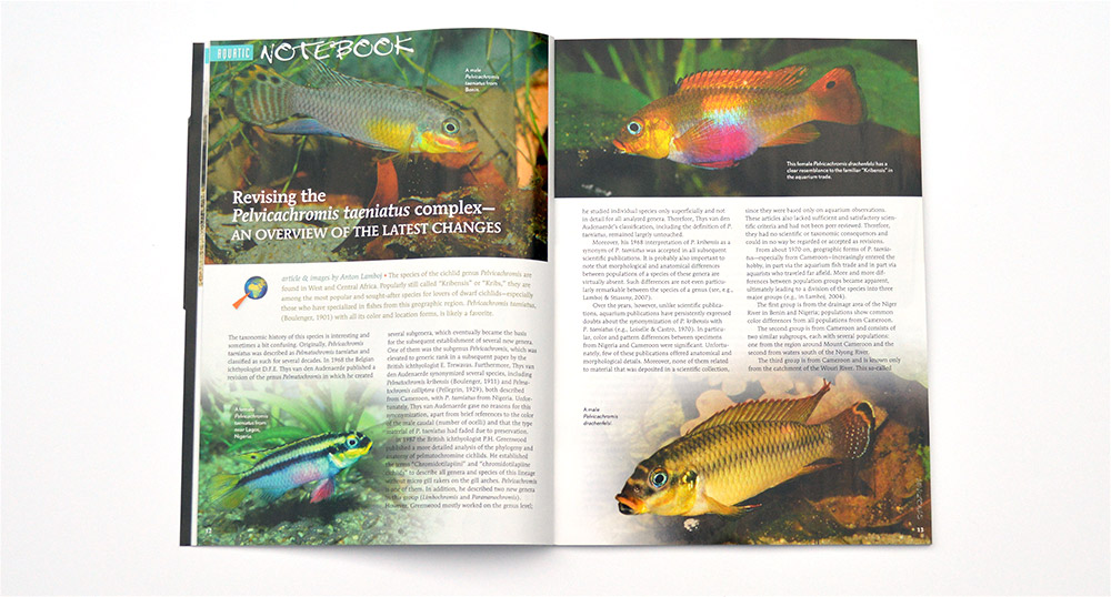 The Aquatic Notebook continues, discussing the taxonomy of the Pelvicachromis taeniatus complex.
