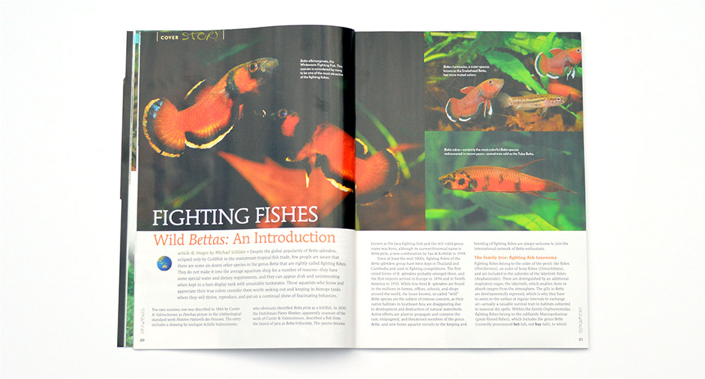 The cover story, Fighting Fishes, starts with Wild Bettas: An Introduction by Michael Schlüter.
