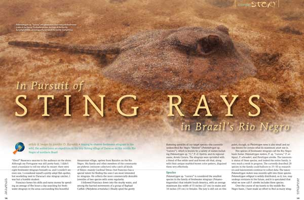 COVER STORY: Hoping to observe freshwater stingrays in the wild, Jennifer O. Reynolds joins an expedition to the tiny fishing village of Daracua on the middle Rio Negro of Northern Brazil.