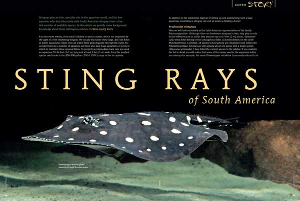 """COVER STORY: Stingrays play an elite, specialty role in the aquarium world, and the few aquarists who deal intensively with South American stingrays have a limited number of available species. Hans-Georg Everes provides some background knowledge about these cartilaginous fishes in """"Stingrays of South America"""""""