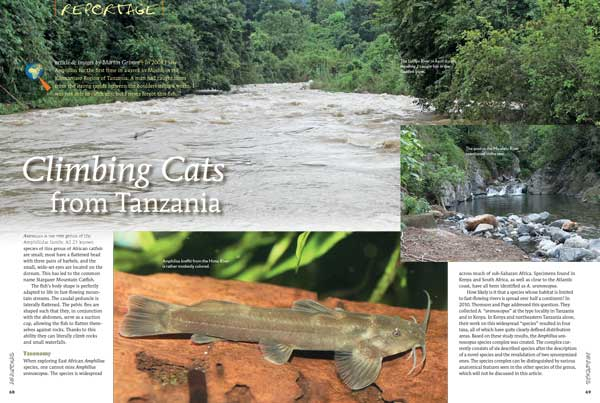 Reportage: Climbing Cats from Tanzania by Martin Grimm - a look at Amphilius catfishes.