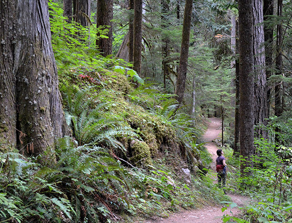 Excursions into wild nature, such as this old growth temperate rainforest trail in Washington's North Cascades National Park provide the seed for aquascaping inspiration.