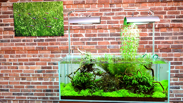 """An experimental design anchored in Java Fern clumps, Micranthemum """"Monte Carlo,"""" and with Pogostemon stellatus growing vertically out of the aquarium."""