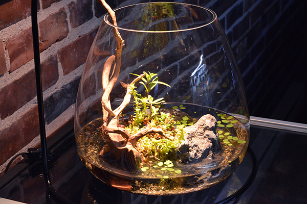 A Wabi-Kusa is a simple and charming miniature expression of the Nature Aquarium philosophy.