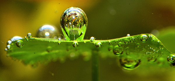 When healthy plants are actively performing photosynthesis in the presence of supplemental carbon dioxide, beautiful bubbles of oxygen can be seen streaming from the leaves.