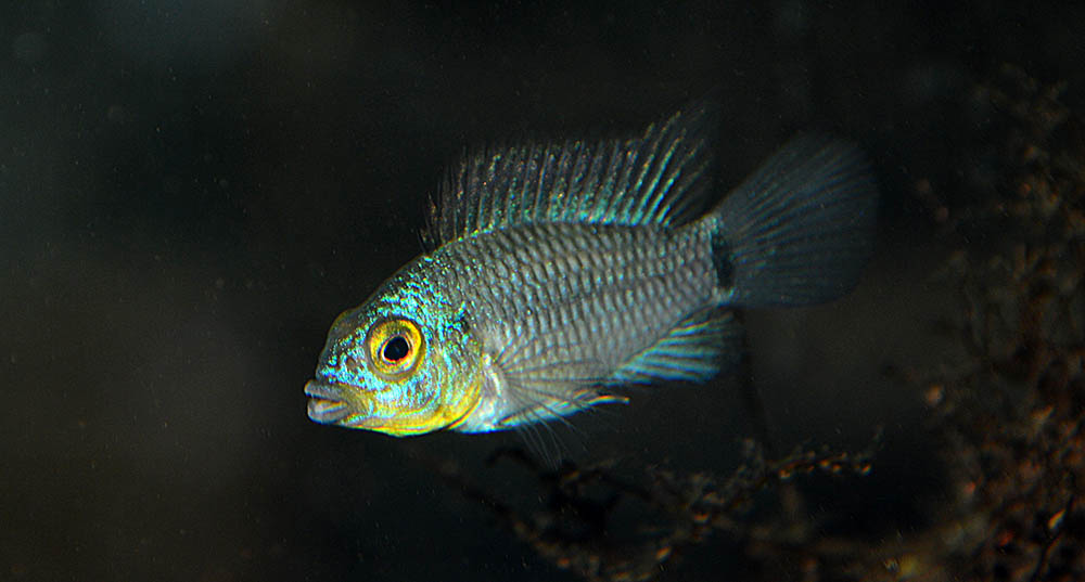 This individual stands out as a little different from most of the phenotypes in the group.