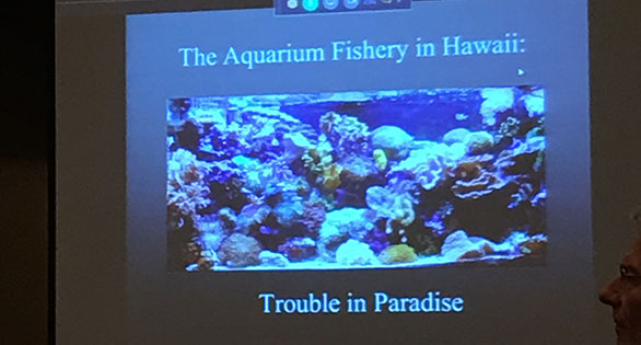 The Aquarium Fishery in Hawaii - Trouble in Paradise. A presentation shown at the recent State of the Aquatic Industry Legislative Update at the 2017 Aquatic Experience Chicago.