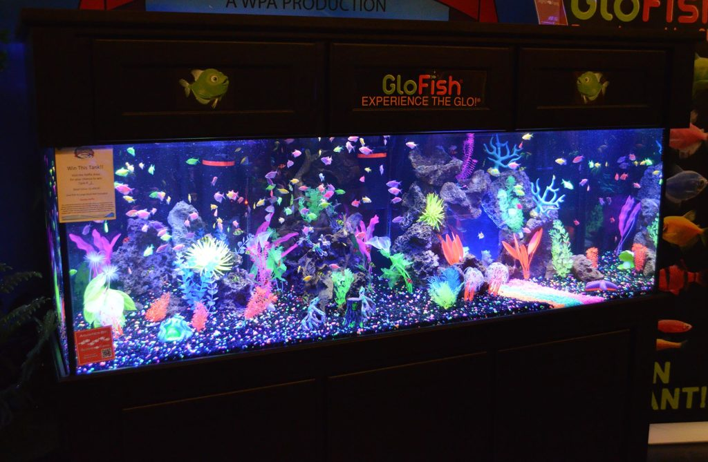How many of the new fluorescent sharks can you spot in this GloFish® display from 2017's Aquatic Experience-Chicago? Image copyright: Matt Pedersen