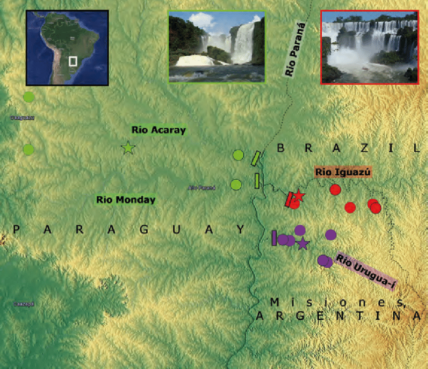 From the paper: Distribution of the G. setequedas group in Middle Paraná river basin. Colored localities show distribution of the G. setequedas group and material examined in the present study. Stars show type localities. Red: G. taroba, green: G. setequedas and violet: G. che. Inset photos show two of the major waterfalls in the area (Cataratas del Iguazú, Salto Monday) and location of the study area within South America