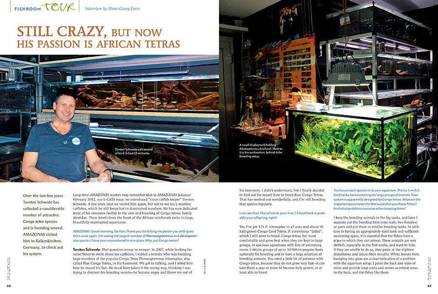 """Long-time AMAZONAS readers may remember that in AMAZONAS January/ February 2012, our L-CATS issue, we introduced """"crazy catfish keeper"""" Torsten Schwede. He has now dedicated most of his extensive facility to the care and breeding of Congo tetras, family Alestidae."""