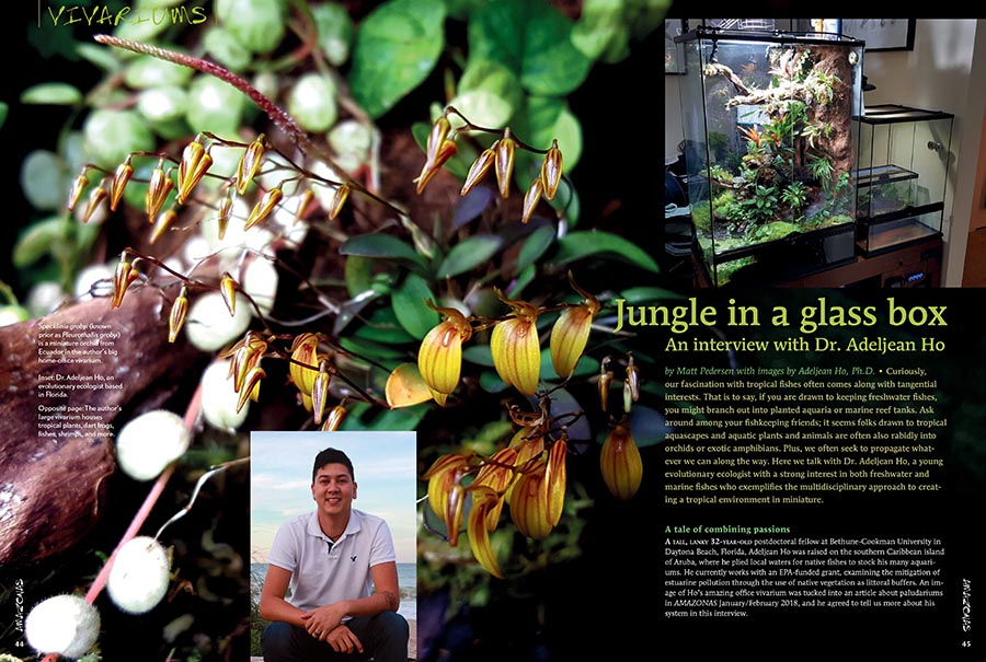 Back in the January/February 2018 issue of AMAZONAS, a vivarium built by Dr. Adeljean Ho was included at the tail end of Sam Rutka's stunning feature on Paludariums. Ho's work piqued our curiosity; as promised, we return with a feature-length interview to gain insight on how Ho blended his passion for orchids, amphibians, fish, and shrimp, into a beautiful slice of the jungle. You can learn even more in the online bonus; the full-length unedited interview with even more photography will be published soon!