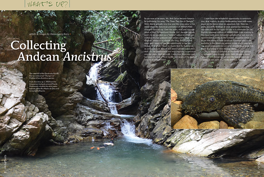 """Hans-George Evers introduces a host of new L-number plecos from the Andes in the first installment of his new """"What's Up?"""" column, an AMAZONAS exclusive!"""