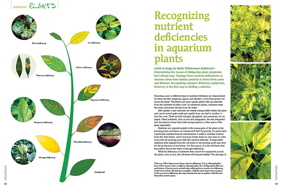 """Maike Wilstermann-Hildebrand shares the secrets of """"Recognizing nutrient deficiencies in aquarium plants"""", sure to become a handy reference for every aquascaper!"""
