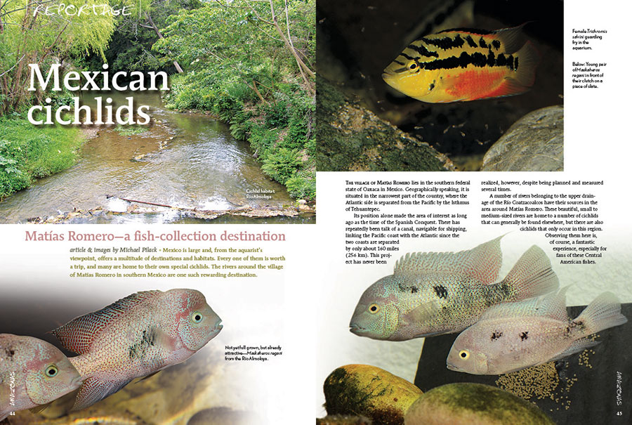 """""""Mexico is large and, from the aquarist's viewpoint, offers a multitude of destinations and habitats. Every one of them is worth a trip, and many are home to their own special cichlids. The rivers around the village of Matías Romero in southern Mexico are one such rewarding destination."""" Join Michael Pilack as he transports you to the southwestern Mexican state of Oaxaca in search of unique Central American Cichlids."""