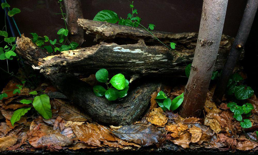 Planted forest terrarium in 65-gallon (256L) glass tank.