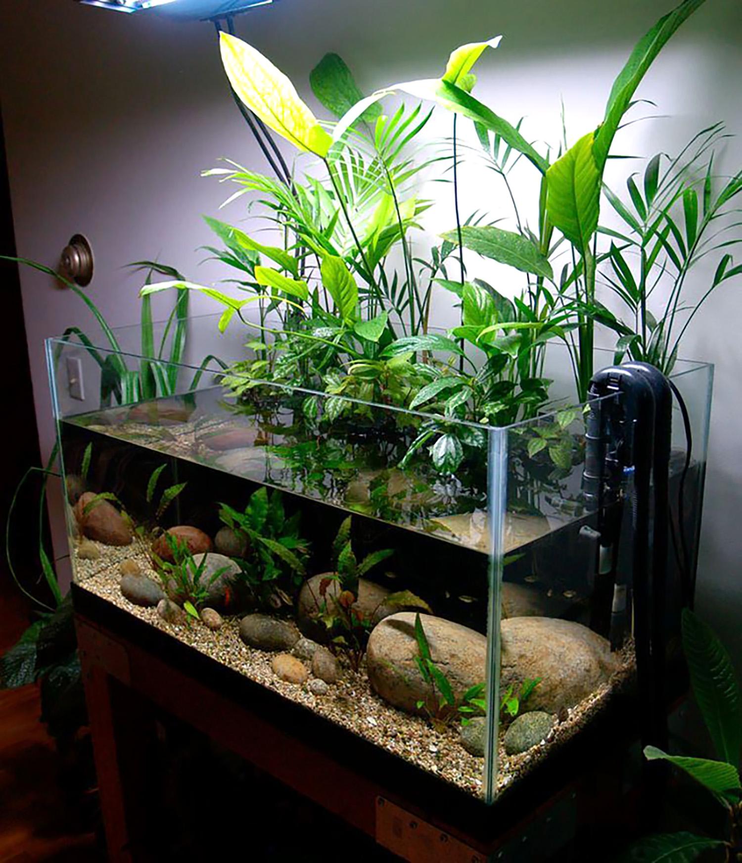 50-gallon Planted Riparium
