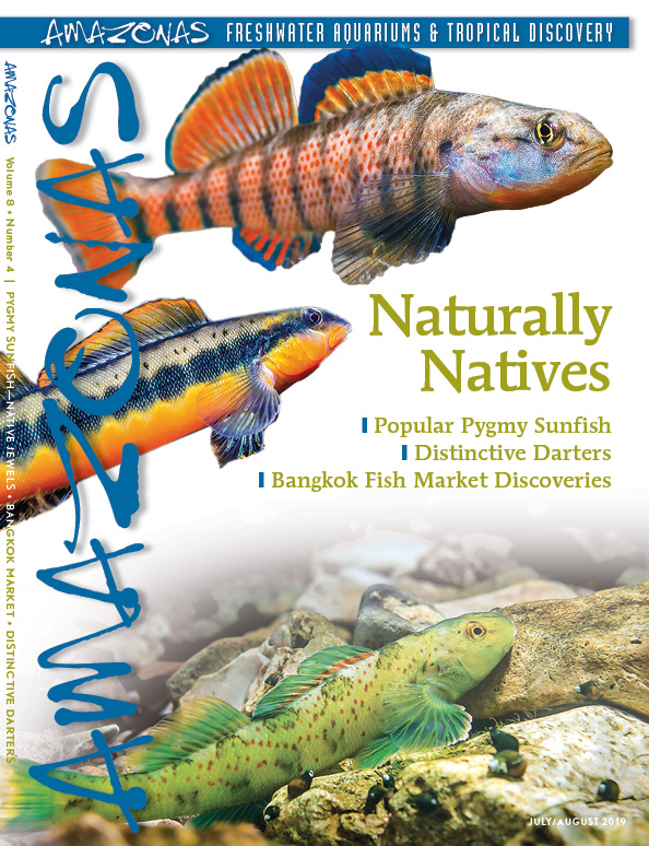 AMAZONAS Magazine, Volume 8, Number 4, NATURALLY NATIVES, arrives just in time for summer! Jam-packed with colorful fishes rivaling most coral reef species, this issue hits incredibly close to home. On the cover: Top: Rainbow Darter (Etheostoma caeruleum) Middle: Tangerine Darter (Percina aurantiaca), Bottom Greenside Darter (E. blennoides). All Images by Isaac Szabo.