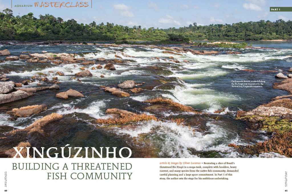 Considering the importance of the Río Xingú as a biodiversity hotspot and the location of major conservation issues, we added some Brazilian flair to this issue! Oliver Lucanus has been studying this river system for years and decided to recreate this threatened habitat in captivity. Follow his journey step-by-step in creating a Río Xingú biotope!