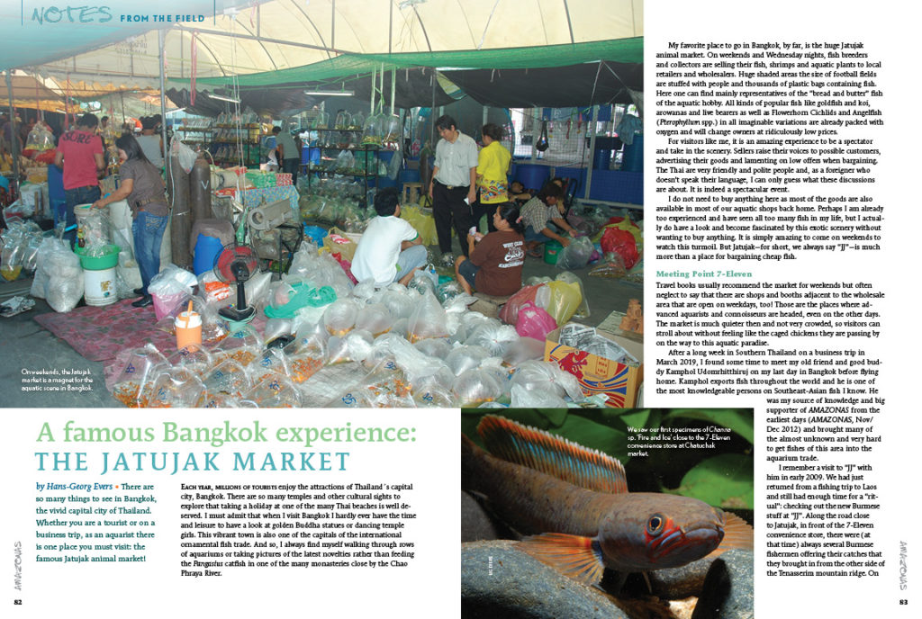 If you're one of those aquarists who visit any and all aquarium shops, this article is for you! Ever wonder how fish are sold in other countries? This installment of Notes From the Field from Hans-Georg Evers is full of photos and information about Bangkok fish markets - you won't find this information anywhere else!