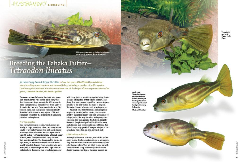 Hans-Georg Evers and Jeffrey Christian share the secrets of breeding the Fahaka Puffer (Tetraodon lineatus).