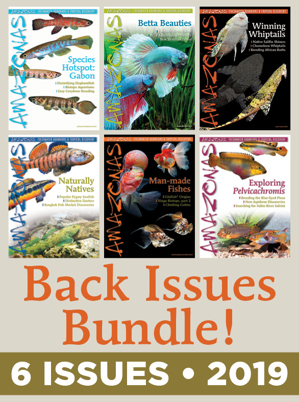 AMAZONAS Magazine Back Issue Bundle - 2019