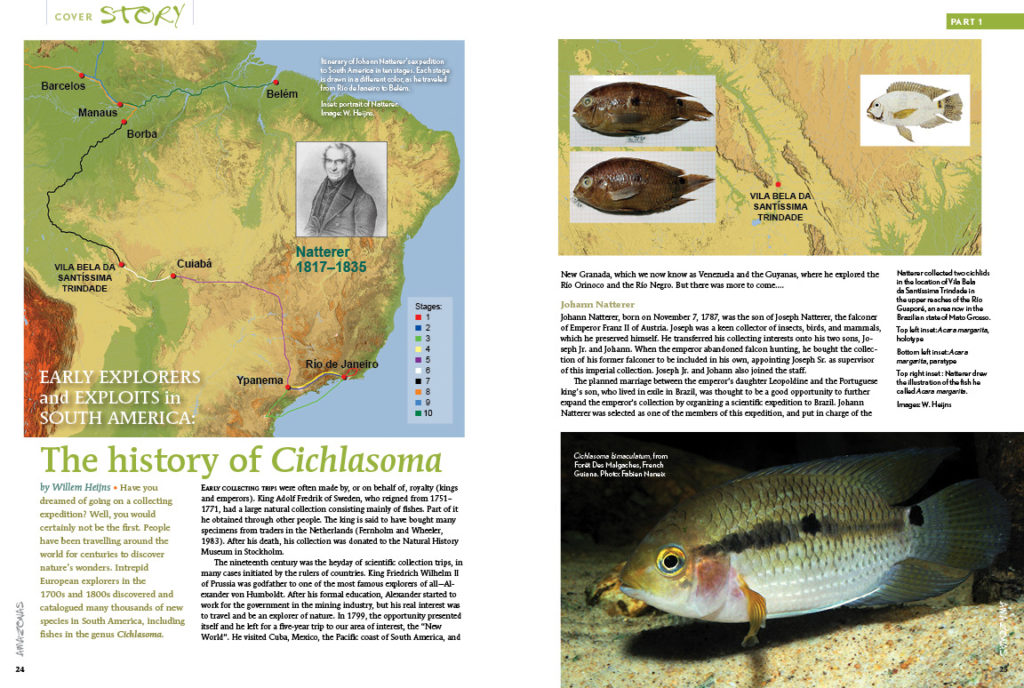 The history of Cichlasoma? Willem Heijns tells all, in the first of a two-part series.
