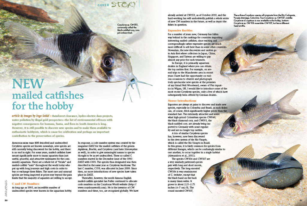Corydoras lovers rejoice: Ingo Seidel introduces several new mailed catfishes for the aquarium hobby!