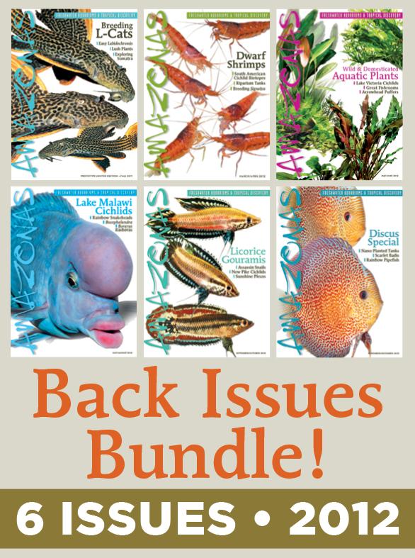 AMAZONAS Magazine Back Issue Bundle - 2012