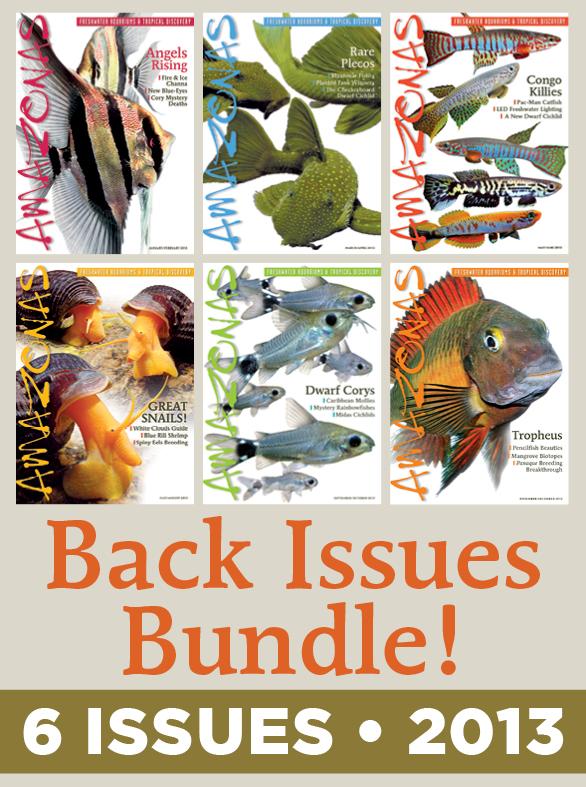 AMAZONAS Magazine Back Issue Bundle - 2013