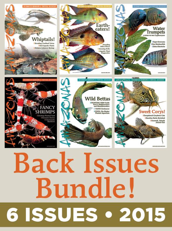 AMAZONAS Magazine Back Issue Bundle - 2015