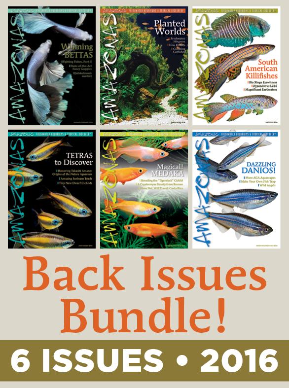 AMAZONAS Magazine Back Issue Bundle - 2016