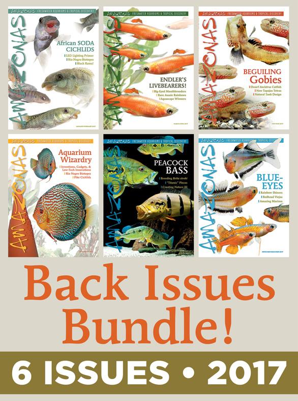 AMAZONAS Magazine Back Issue Bundle - 2017