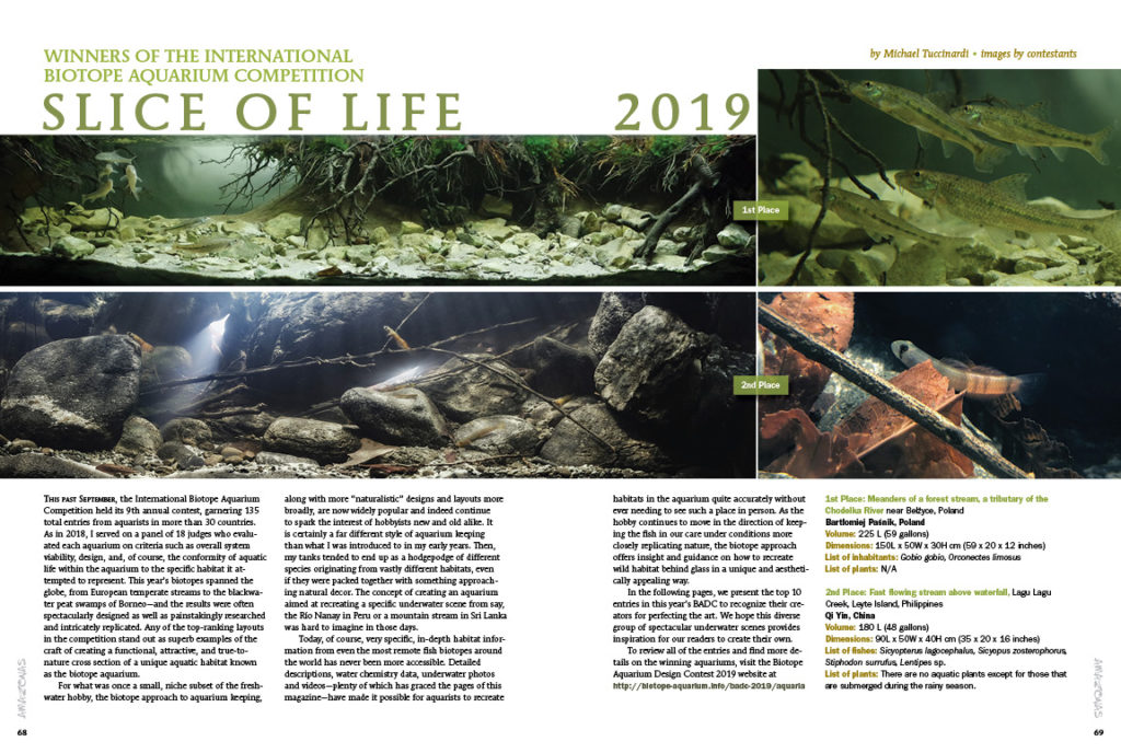 Slice of Life 2019: competition judge and AMAZONAS Sr. Editor Michael J. Tuccinardi presents and discusses the winners of the recent International Biotope Aquarium Competition.