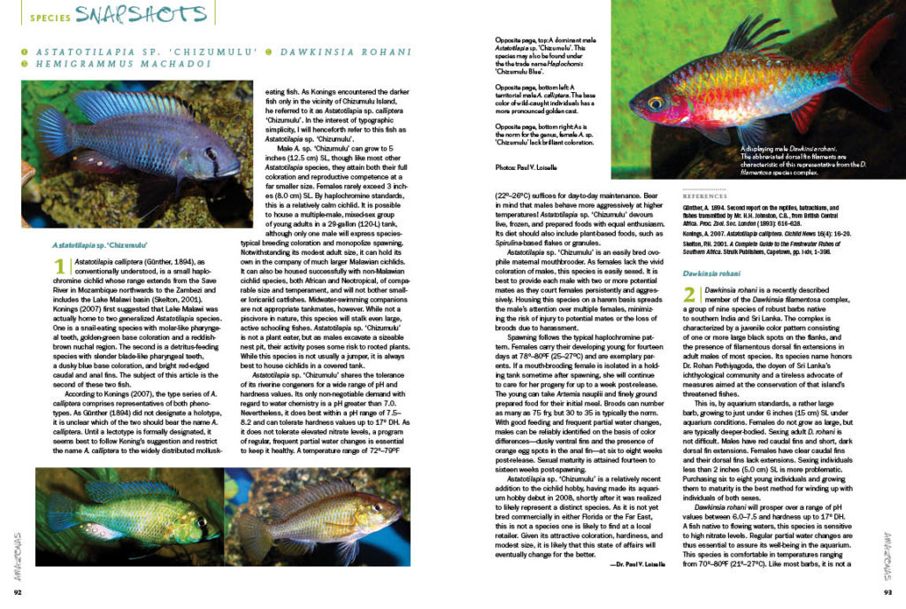 AMAZONAS Magazine's Species Snapshots present new and exciting species in the aquarium hobby, all worthy of your attention. In this issue, we share in-depth looks at Astatotilapia sp. 'Chizumulu', Dawkinsia rohani (Rohan's Barb), and Hemigrammus machadoi. This exclusive content is found nowhere else but the pages of AMAZONAS Magazine!