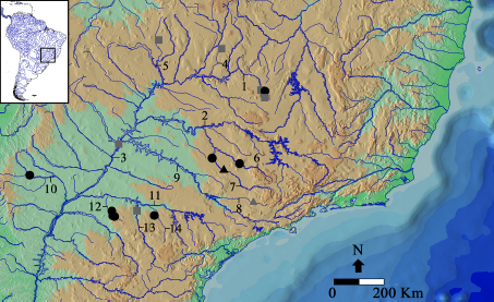 Map of the southeastern South America showing the geographic distribution of Bunocephalus larai (type locality- grey triangle; non-types- grey squares) and B. hertzi (holotype black triangle; paratypes- black circles) in the upper Rio Paraná basin. 1—Rio Paranaíba; 2—Rio Grande; 3—Rio Paraná; 4—Rio São Marcos; 5—Rio Capivari; 6—Rio Pardo; 7—Rio Mogi-Guaçu; 8—Rio Piracicaba; 9—Rio Tietê; 10—Rio Ivinhema; 11—Rio Paranapanema; 12—Rio Pirapó; 13—Rio Tibagi; 14—Rio das Cinzas. Figure 3 in Esguícero, Castro, and Pereira 2020.