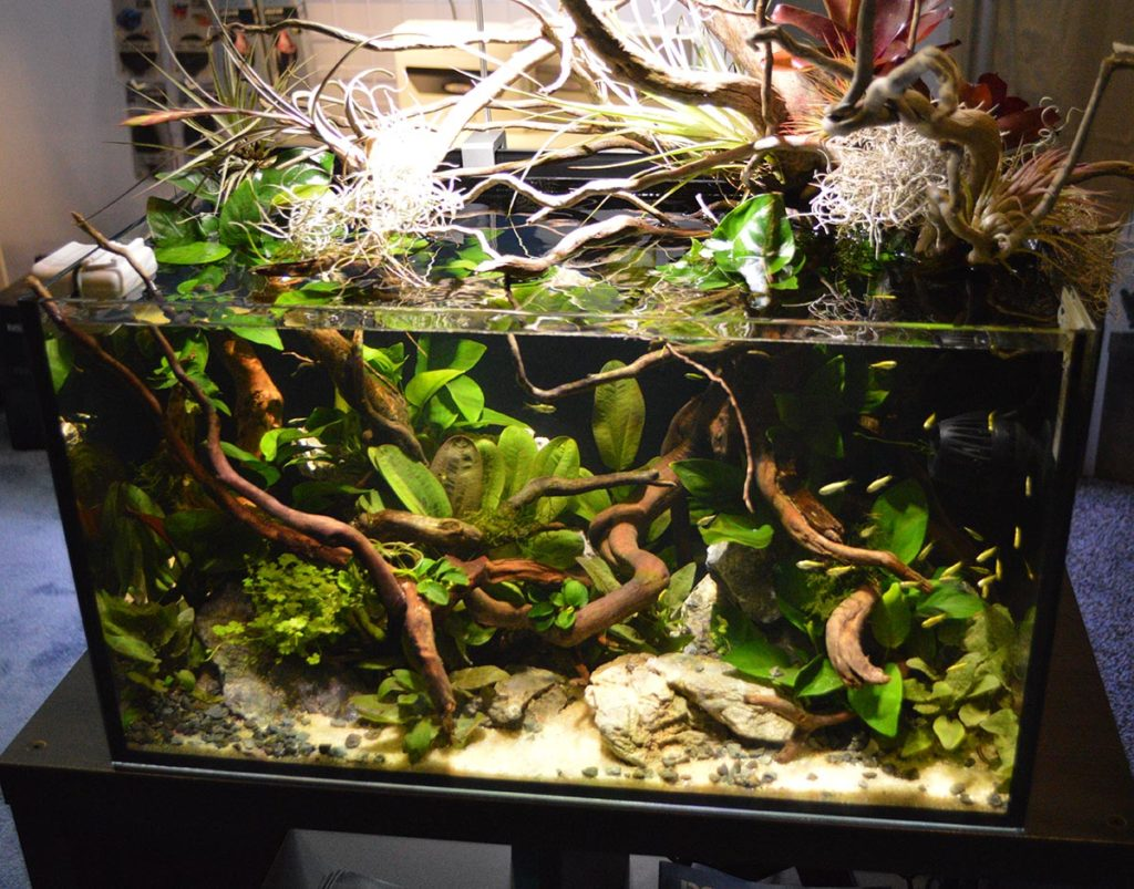 This aquascaped aquarium on display at the Hydor Booth during the 2020 Global Pet Expo featured plants and wood by Florida Aquatic Nurseries and Aqua'escape, fish from Aquarium Fish Depot, and was aquascaped by MDA (Miami Dade Aquascaping). The tank is an Innovative Marine Nuvo Fusion 20 with Seltz DC 500 pump conversion and Aqamai LFs light and KPs wavemaker.