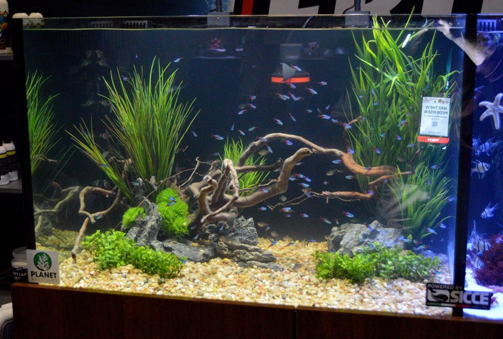 This is the freshwater side of the Fritz Aquatics display.