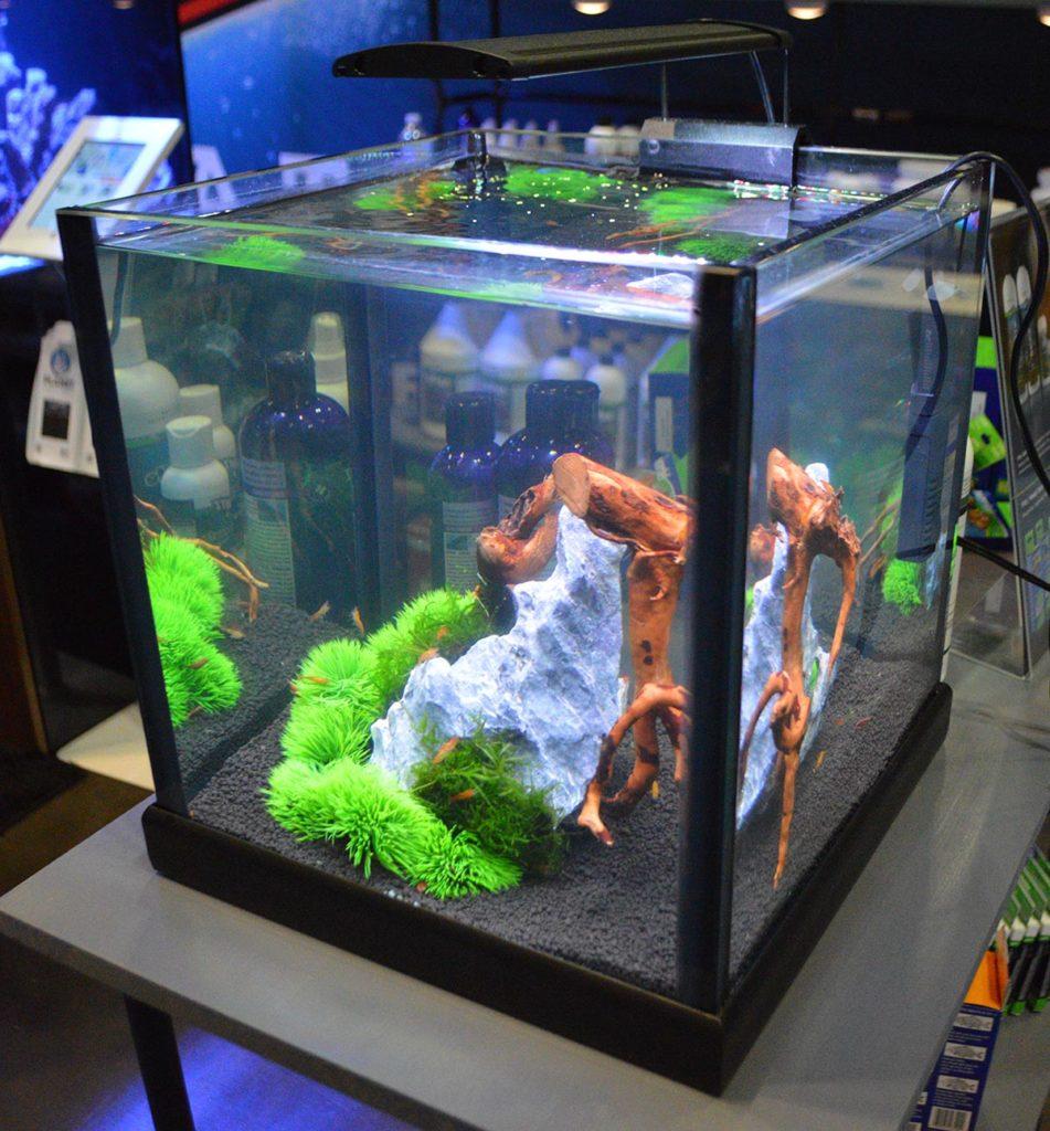 A small shrimp tank on display as part of the Cobalt Aquatics booth.