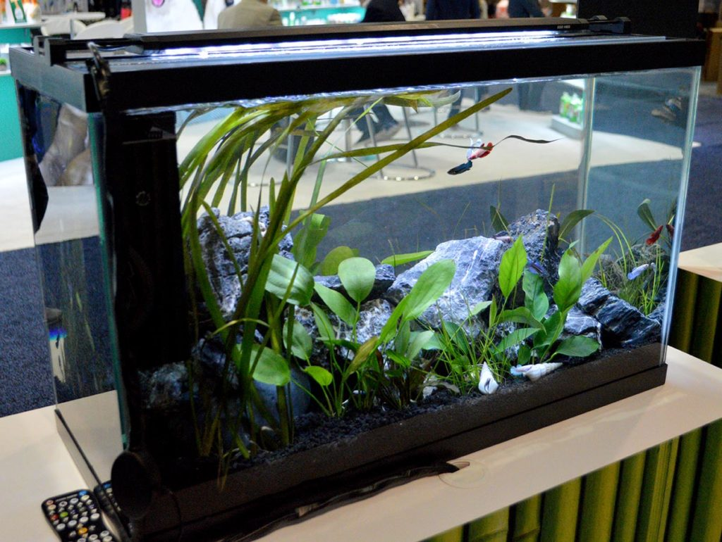 Zoo Med also featured a sorority tank of several female bettas provided by Nautilus Tropical Fish Wholesale.