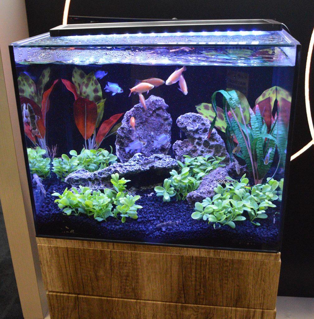Marineland's Exhibit Series aquariums; this the 20-gallon version.