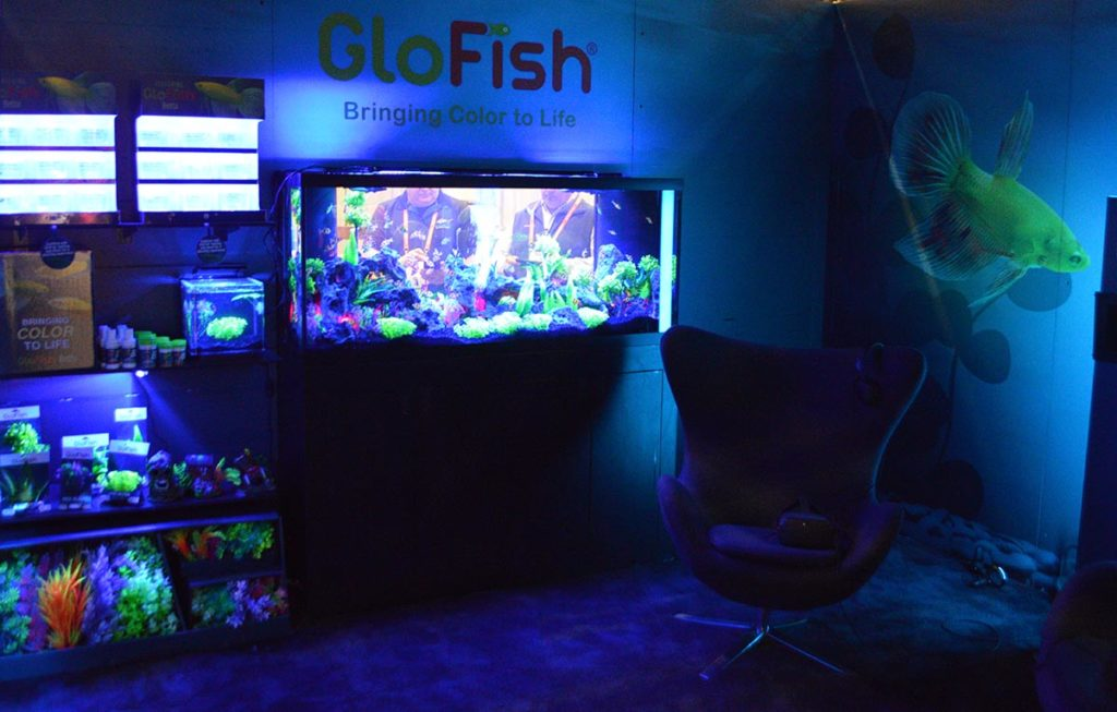 GloFish didn't just get a nice display, they got an entirely blue-lit private viewing room experience.