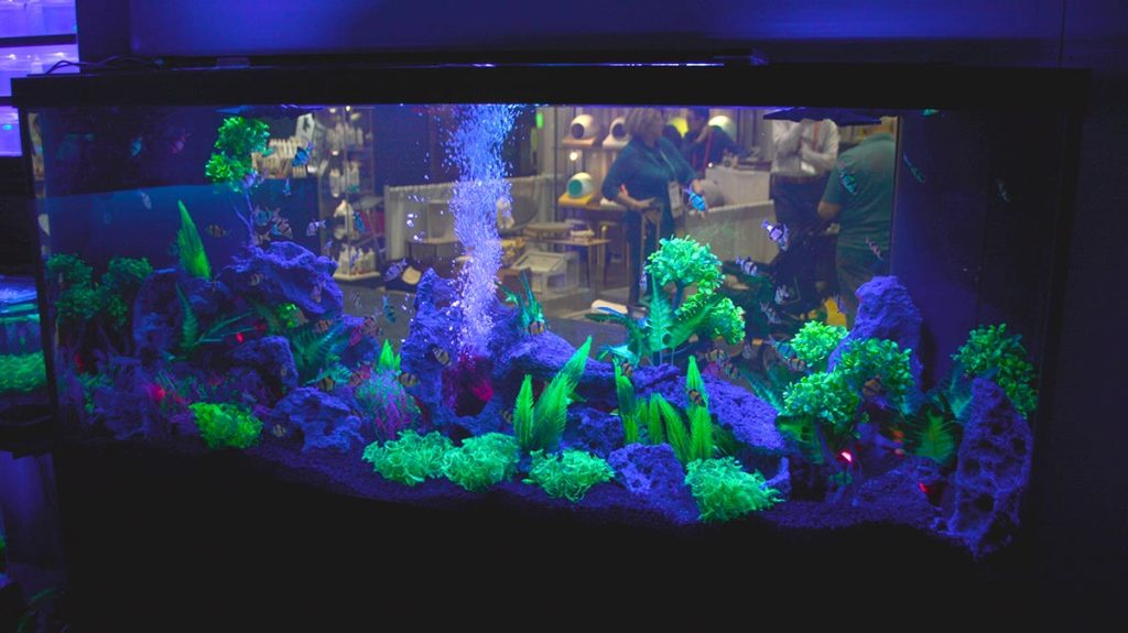 A closer look at the GloFish display in the viewing room.